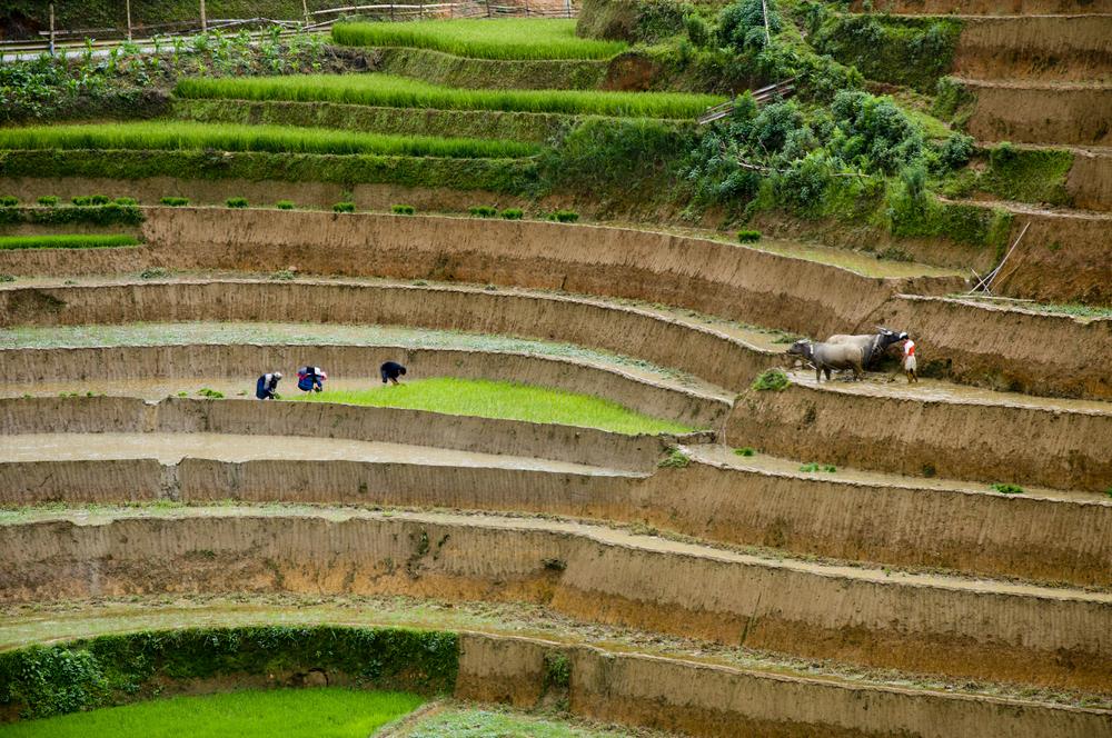 japanfarm
