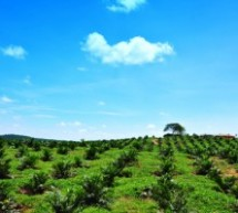 $2.5 Billion Renewable fund for South East Asia